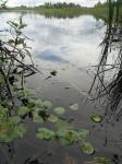 Wetland by Mia Dalby-Ball Eastern Poland boarding Belaruse
