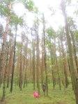 Pine Forest Poland Mushroom Picking Mia dalby-ball