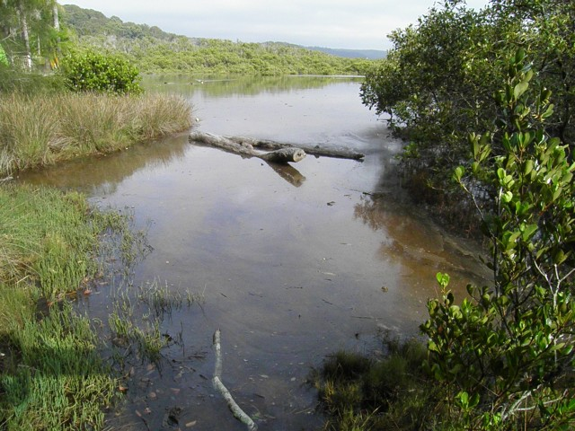Careel bay Saltmarsh covered by High tide Mia Dalby-Ball
