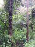 Grandmother Parisha Forest