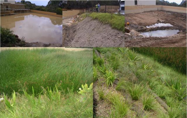 Before and after photos of Belrose Wetlands